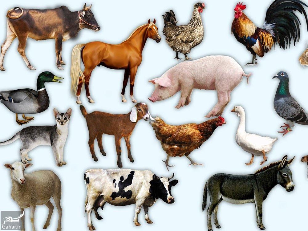mataleb www.gahar .ir 01.10.97 4 فهرست حیوانات اهلی که می توان در خانه نگهداری کرد