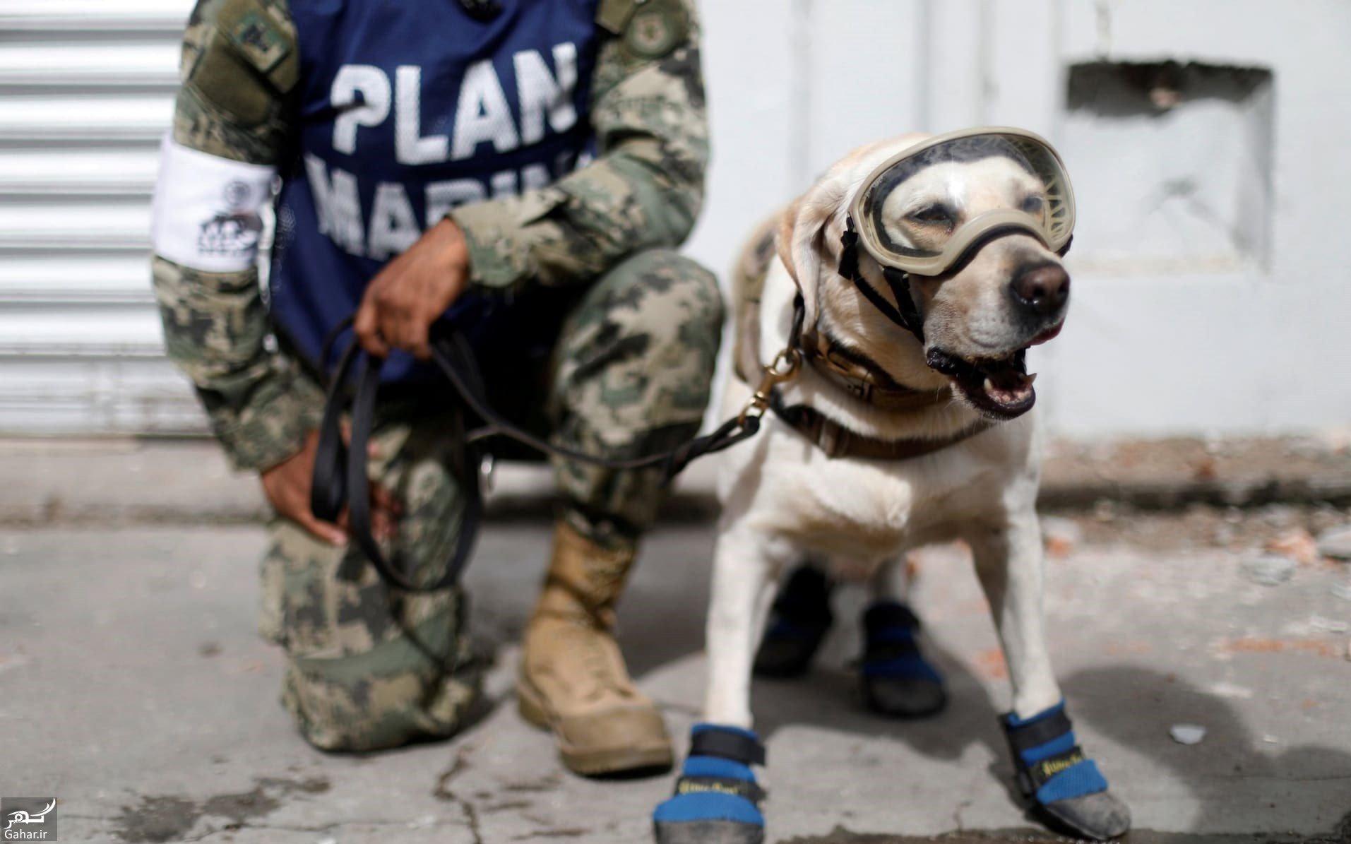 mataleb www.gahar .ir 05.10.97 7 سگ های زنده یاب چگونه فعالیت می کنند؟