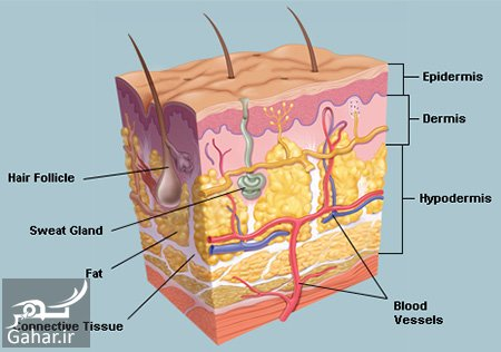 mataleb www.gahar .ir 26.09.97 5 لایه های پوست انسان را بشناسید