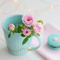 عکس گل های زیبا برای پروفایل