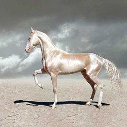 فهرست اسب های معروف تاریخ