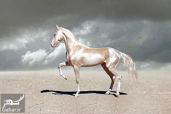 فهرست اسب های معروف تاریخ, جدید 1400 -گهر