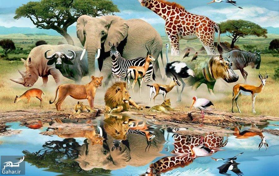 آیا می دانید تفاوت حیوان و جانور چیست؟, جدید 1400 -گهر