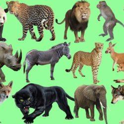 با حیوانات سریع جهان آشنا شوید