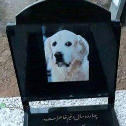 خاکسپاری سگ