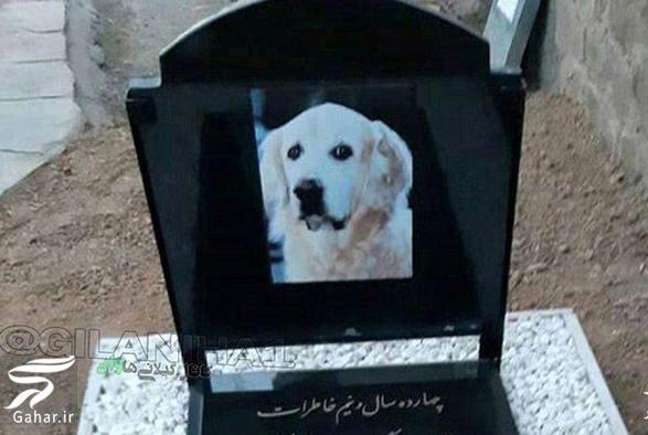 dog die مراسم خاکسپاری سگ توسط یک خانواده پولدار در رشت! + عکس