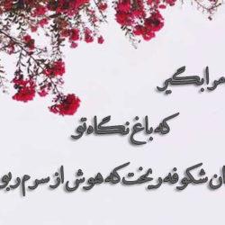 چند شعر نو عاشقانه کوتاه