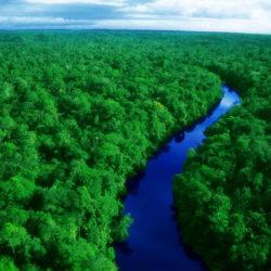راهنمای سفر به آمازون + جاذبه های گردشگری آمازون
