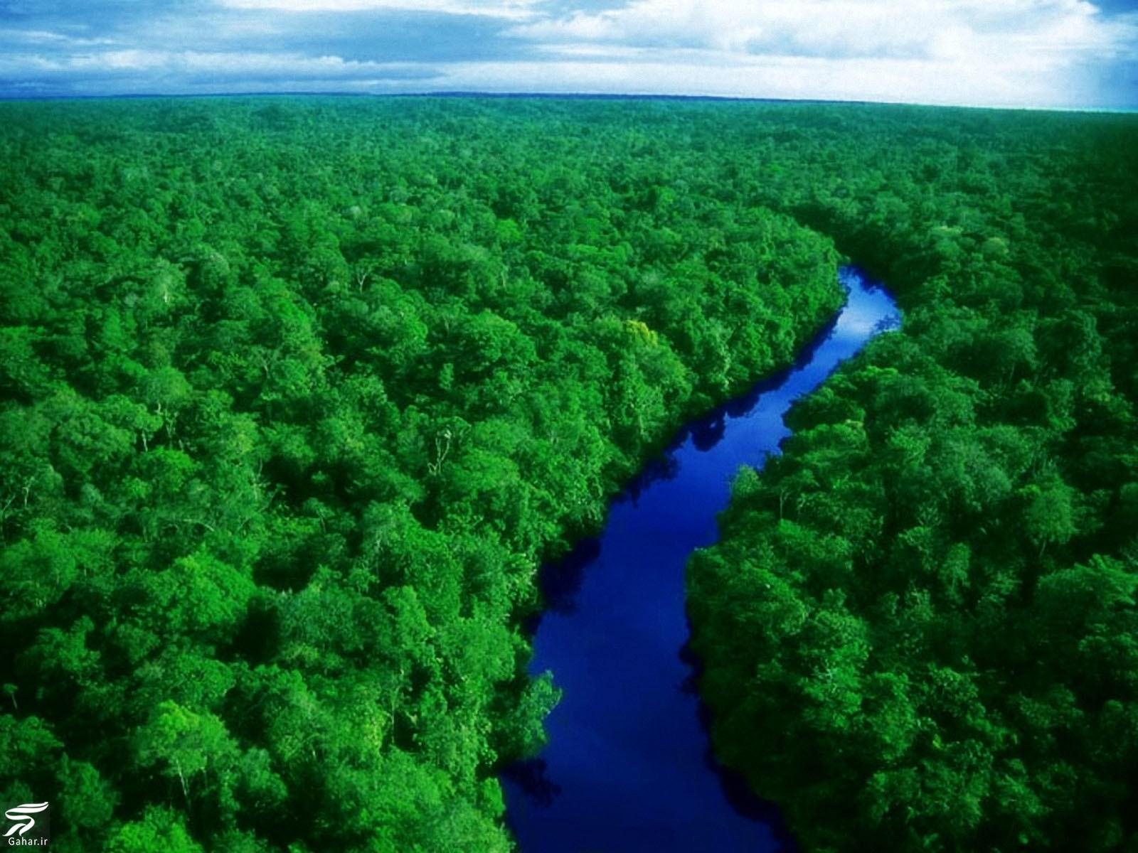 راهنمای سفر به جنگل آمازون + جاذبه های گردشگری آمازون, جدید 1400 -گهر