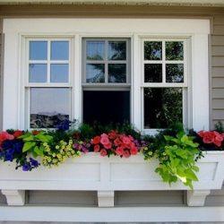 حل مشکل پشه زدن به گل و گلدان