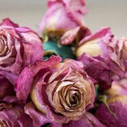 روش هایی برای خشک کردن گل طبیعی
