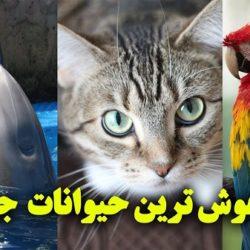 باهوش ترین حیوانات