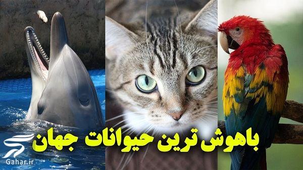 www.gahar .ir 04.07.98 2 1 آشنایی با باهوش ترین حیوانات جهان