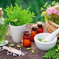 تاریخچه داروهای گیاهی