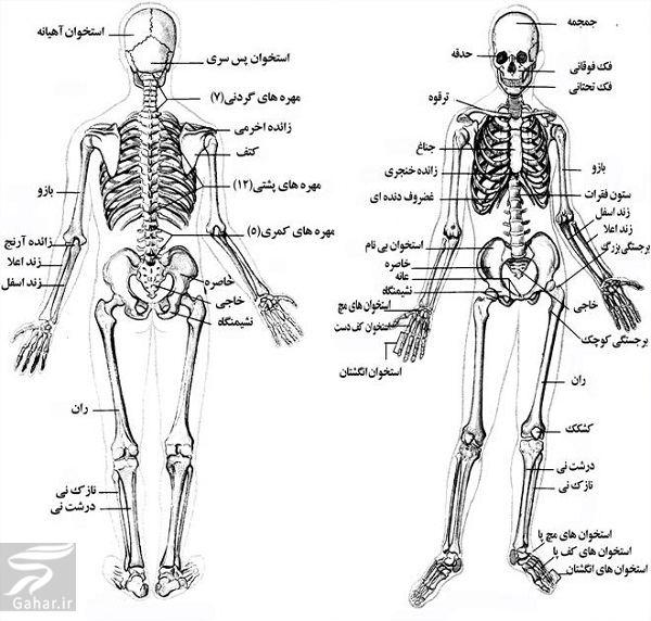 www.gahar .ir 27.06.98 1 معرفی کامل اسکلت بدن انسان