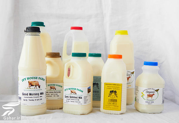 milk تفاوت خواص شیر گاو، بز و گوسفند در چیست؟