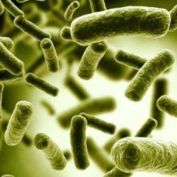 آلوده ترین عضو بدن کجاست؟