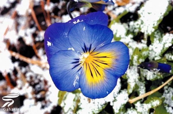 goolll کاشت گل های مناسب فصل زمستان