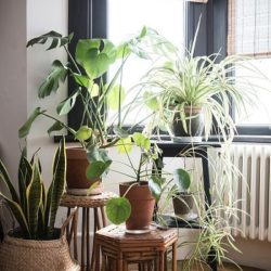 راه کارهایی برای ایجاد تصفیه هوای منزل