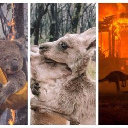 تصاویری دلخراش از آتش سوزی جنگل های استرالیا / ۱۳ عکس