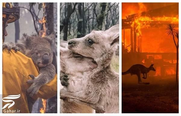 1222 1 تصاویری دلخراش از آتش سوزی جنگل های استرالیا / 13 عکس