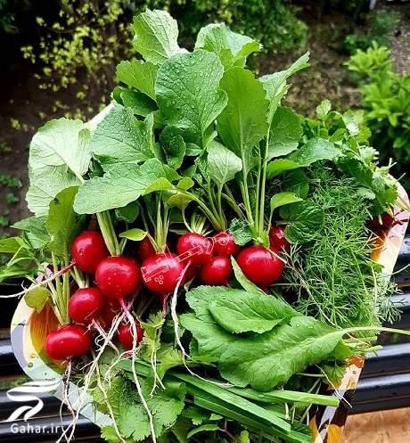 sabzi خواص انواع سبزی خوردن را بدانید