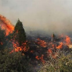 تصاویر دردناک از آتش سوزی جنگل های بلوط زاگرس