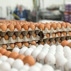 قیمت تخم مرغ تا شب عید چقدر می شود ؟