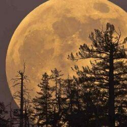 پدیده اَبَر ماه صورتی را امشب از دست ندهید, جدید 1400 -گهر